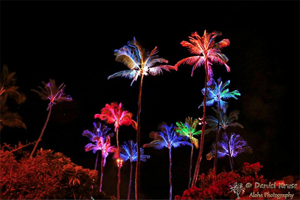 lighted palms